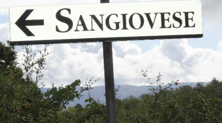 Revisiting Sangiovese
