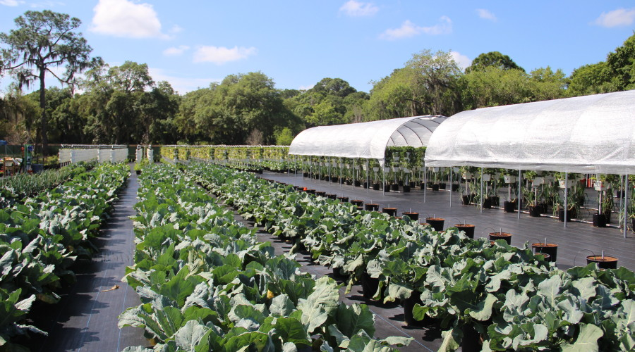 How Sweet It Is – Hydroponic Farming At Sweetgrass Farms