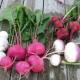 Turnips with Vinaigrettes, Sauces, Etc.